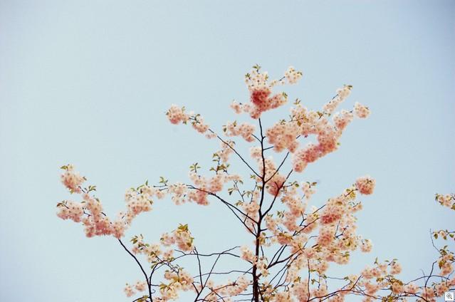 Blüten von unten