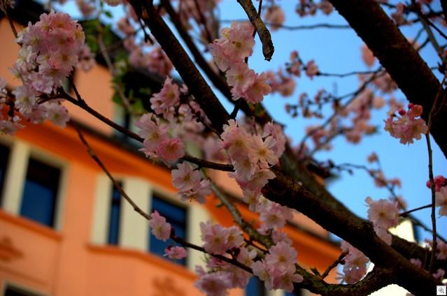 Blüten vor Haus