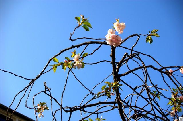 Weniger Blüten