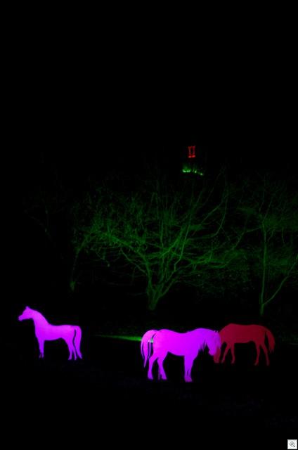 Pferde II