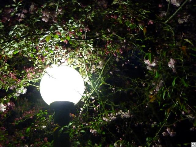 Lampe mit Blüten