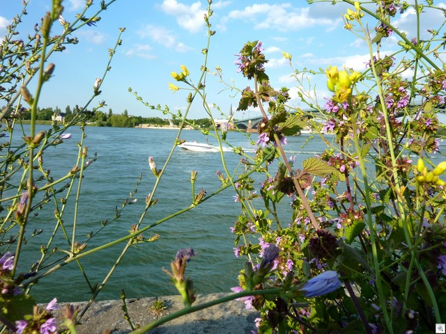 Mehr Rhein