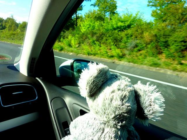 Koala on Tour