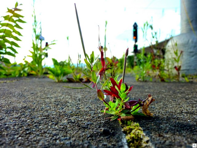 Noch ne Pflanze