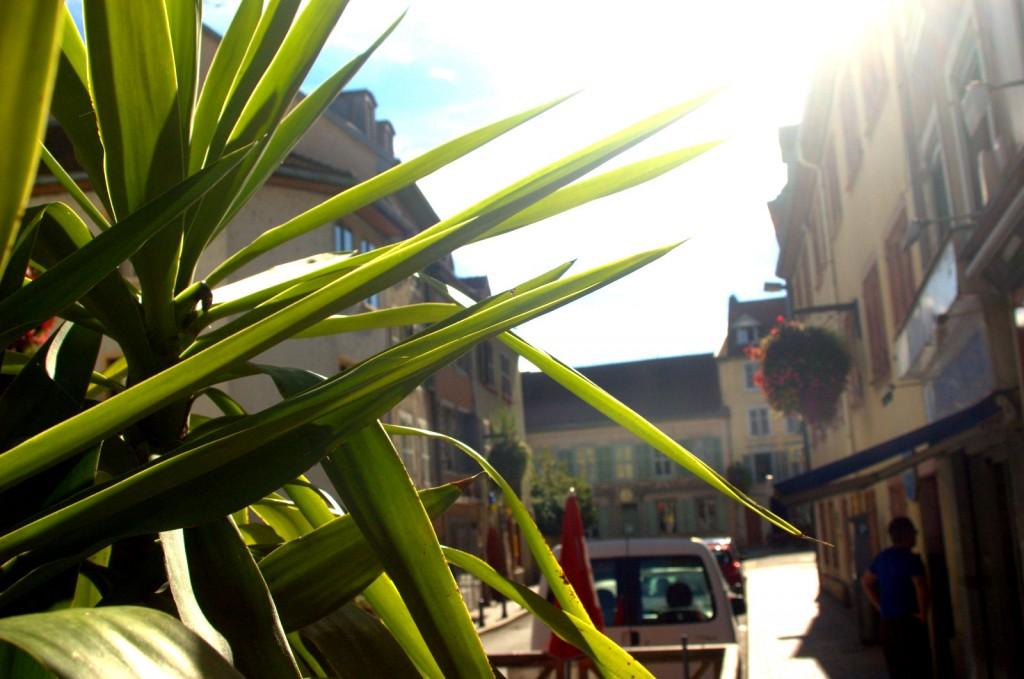 Palmenzeugs