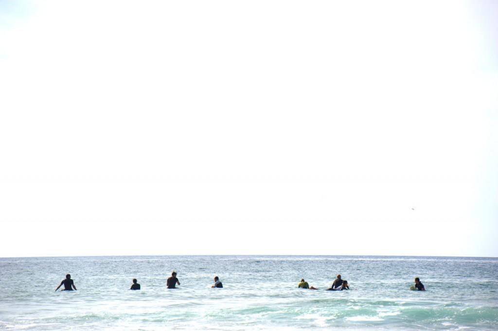 Surferrobben