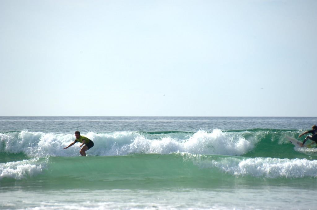 Fähige Surferrobbe